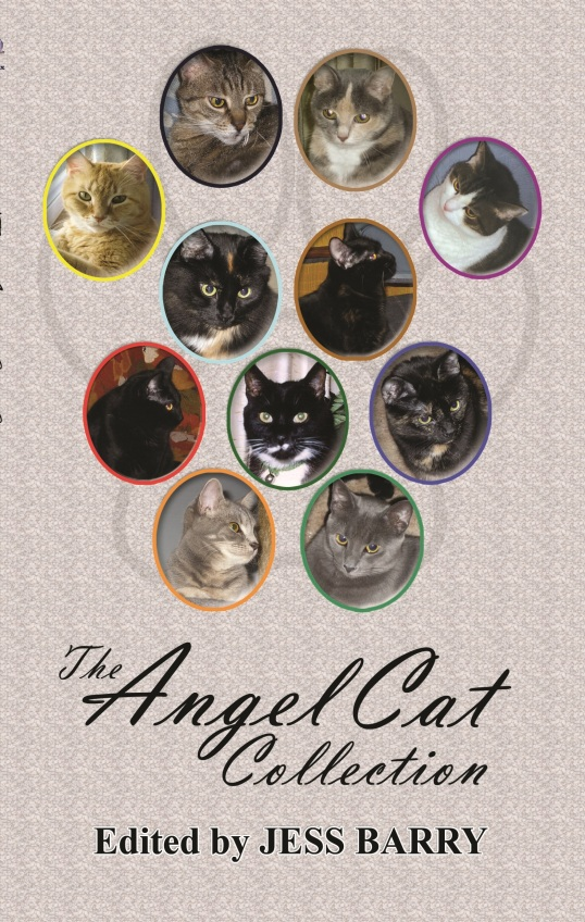 angel cat front